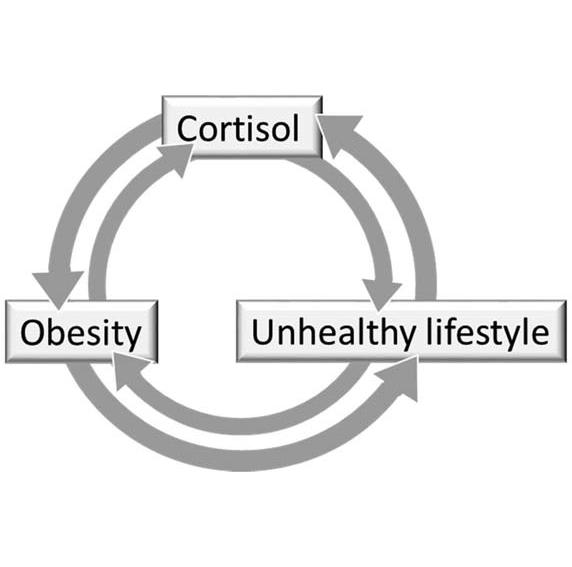 הקשר בין קורטיזול והשמנה