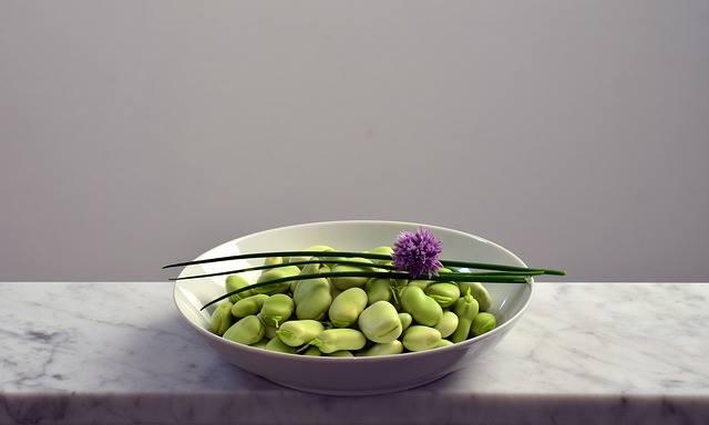 חלבון מהצומח לעומת חלבון מהחי