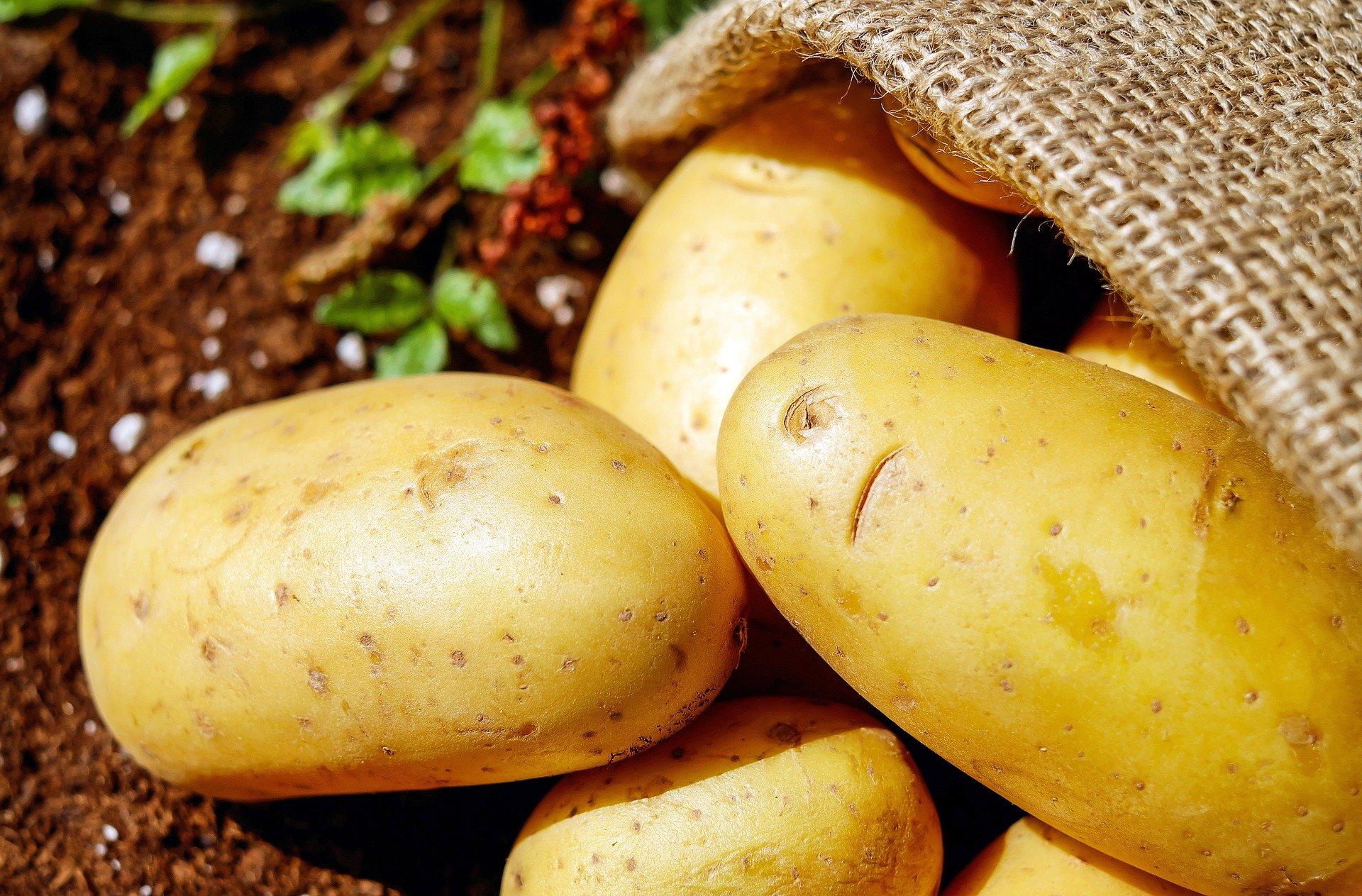 האם חלבון תפוחי אדמה יכול לעזור בסנטזת שריר? (ספוילר.. לא בטוח)