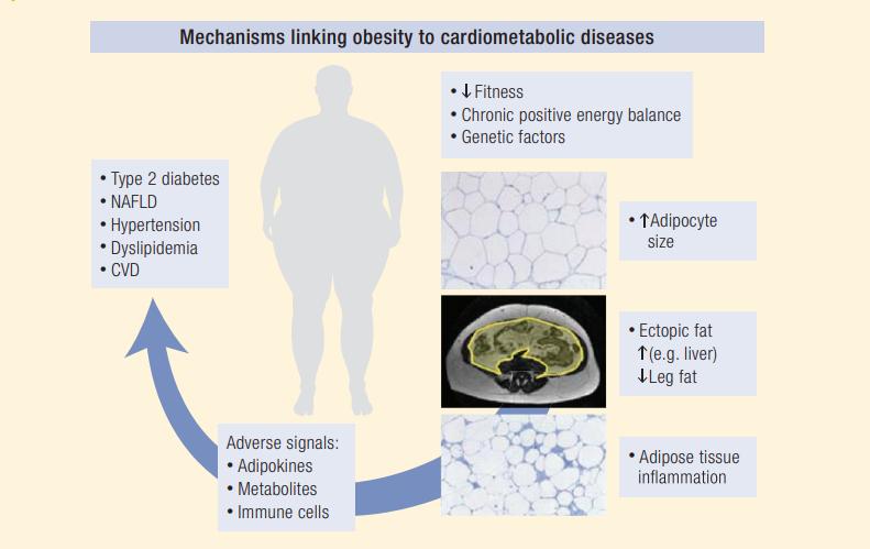 האם ישנה השמנה בריאה